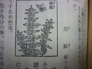 150220_胡麻