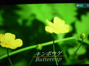 150325_庭の草花