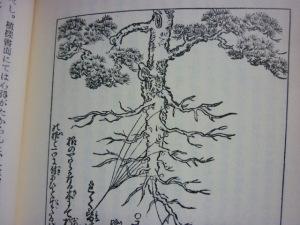 150701_根のやはらかなる木にて