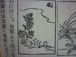 150717_蕨(わらび)