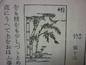 150807_竹