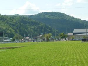 150815_奥会津/気多神社渡御祭・巡行3(稲のこと)