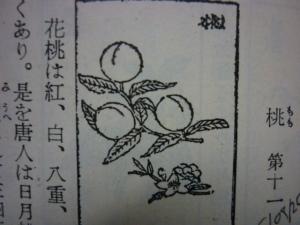 150925_桃