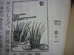 151003_菅(すげ)