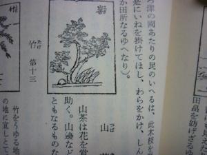 160205_山茶