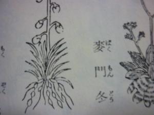 160207_薗に作る薬種(農業全書)