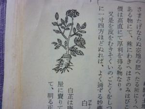 160330_びゃくし