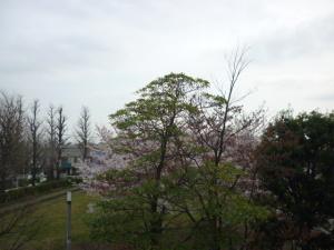 160401_目黒区の桜