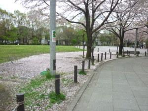 160408_桜散る朝