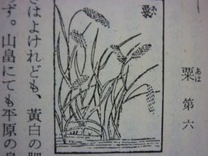 160604_農業全書/粟